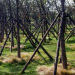 trees-17331_1280
